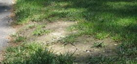 Got Bare Spots on Your Lawn? Solution #1