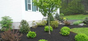 How to Choose a Bark Mulch