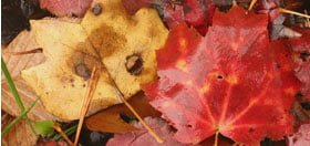 Fall Leaf Clean Up Options